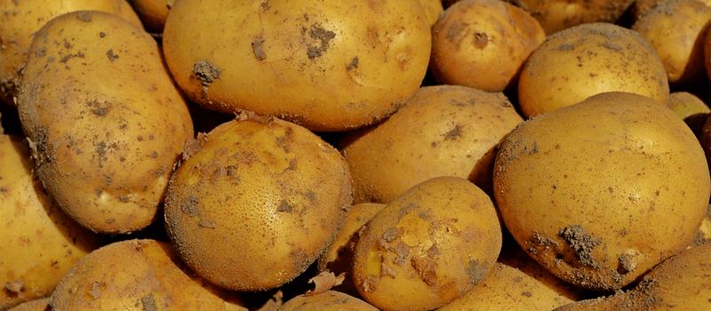 koolhydraatarme aardappels 800x350px
