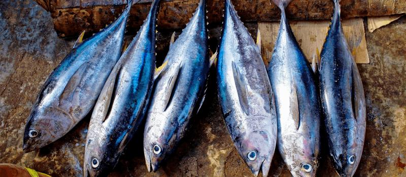 koolhydraatarme tonijn 800x350px