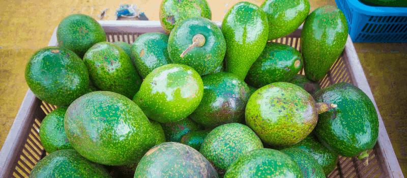 Koolhydraatarme smoothie avocado 800x350px