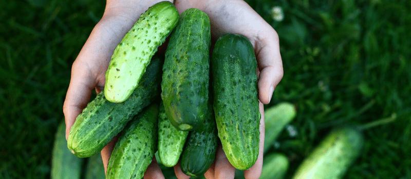 Buikvet verbranden komkommer