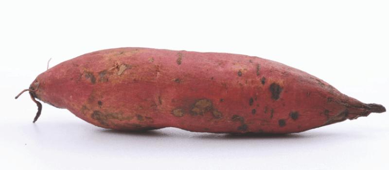 Hoe gezond is de zoete aardappel dan precies