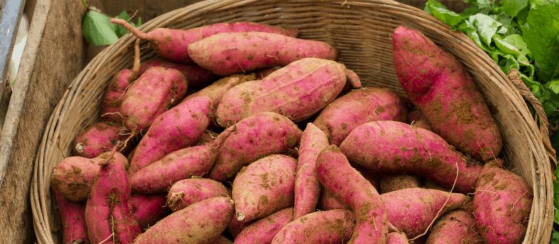 Waar komt de zoete aardappel vandaan